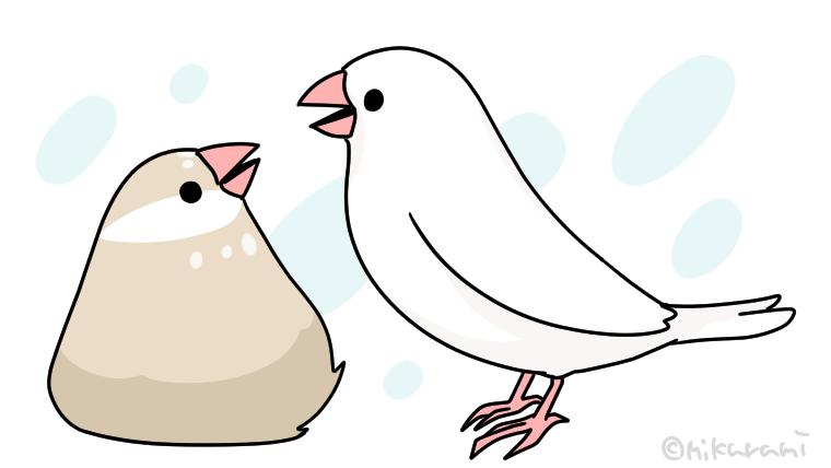 文鳥 鳴き声