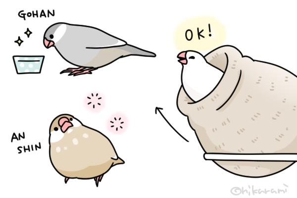 時期 文鳥 雛